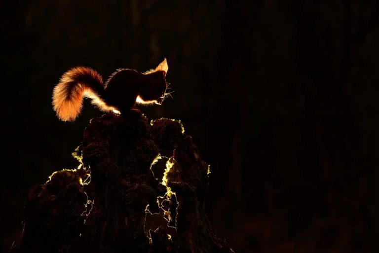 exposition photo sur la faune en Bretagne